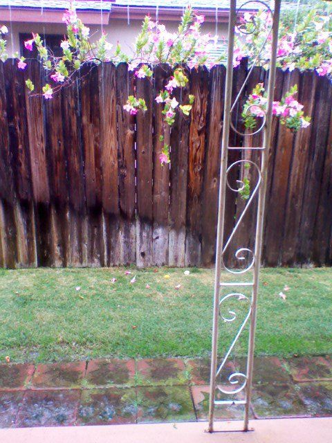 Backyard/fence at my old house in San Diego. Took this picture on a rainy day. :)