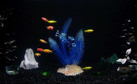 all black glofish tank