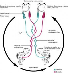 Eye diagram circuit   anatomy   Pinterest