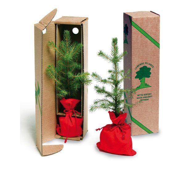 fichtenbäumchen als weihnachtsgruß  weihnachtsgrüße