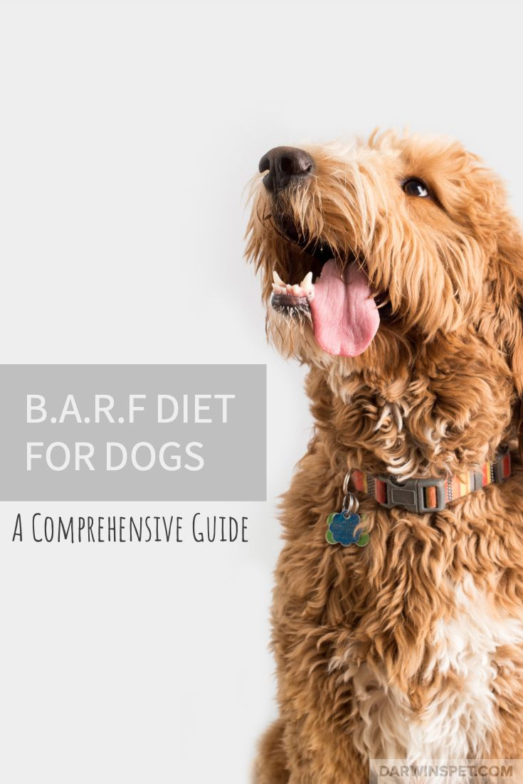 Barf diet for dogs a comprehensive guide raw pet food