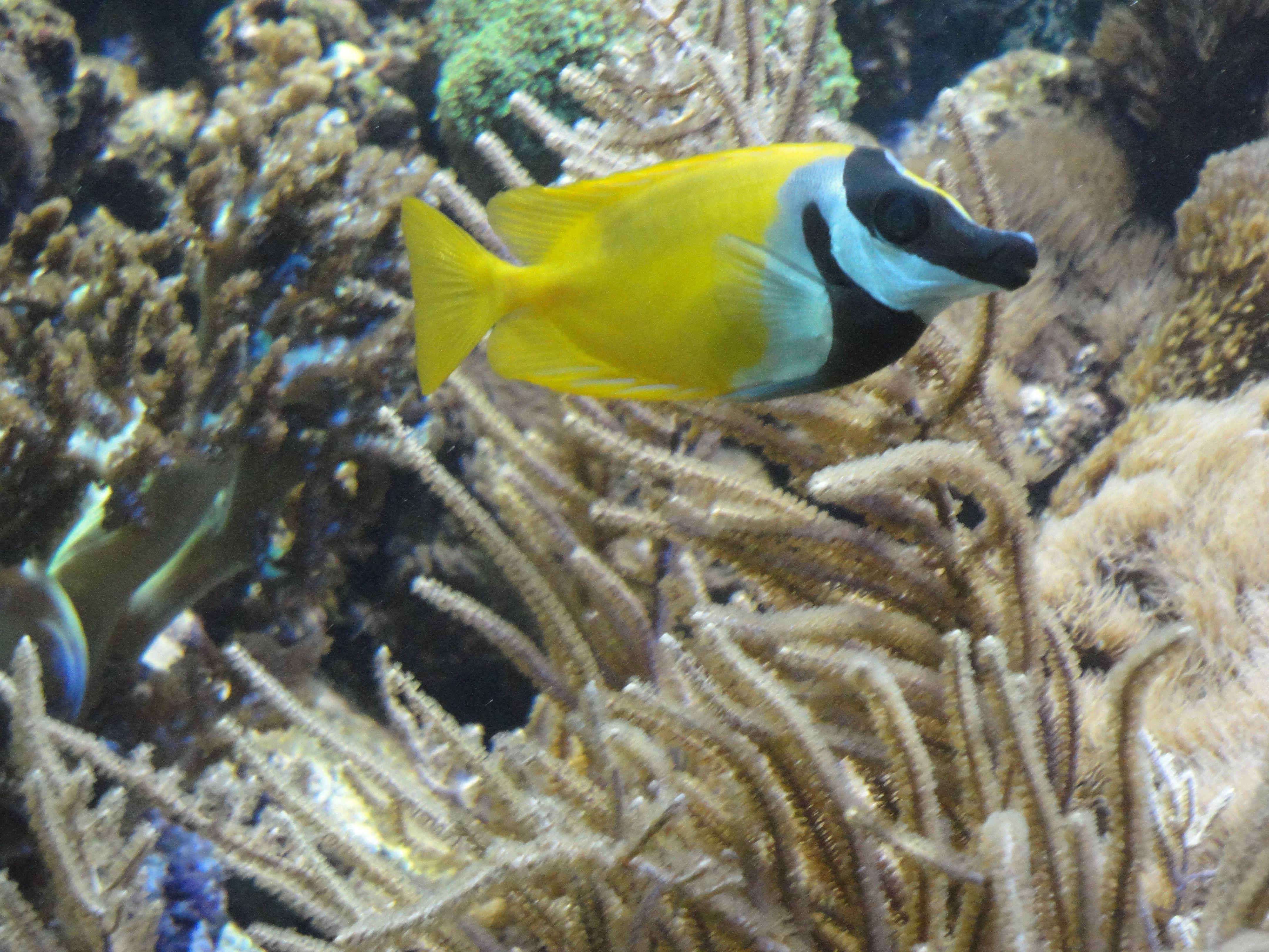 #peixe #fish #barcelona L'aquarium