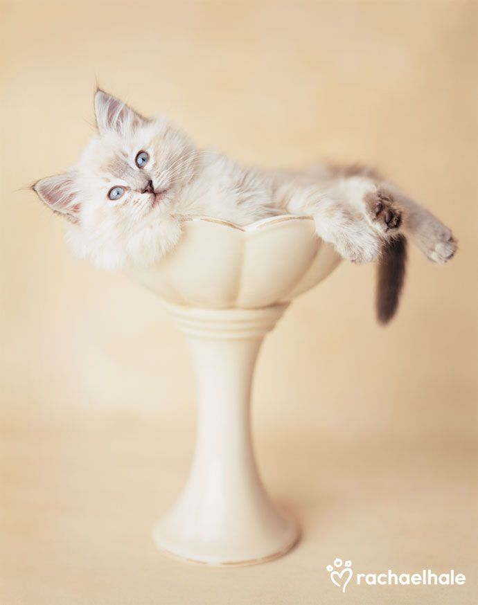 Willow (Moggie) -Willow curves himself to a perfect fit in high places.  (pic by Rachael Hale)