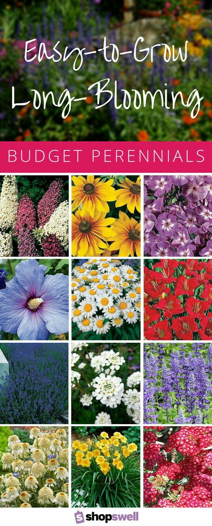 Long Blooming Perennials Outdoors Gardening Pinterest
