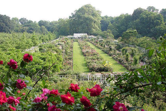 Cranford Rose Garden By Brooklyn Botanic Garden Via Flickr Brooklyn Botanical Garden Atlanta Botanical Garden Botanical Gardens