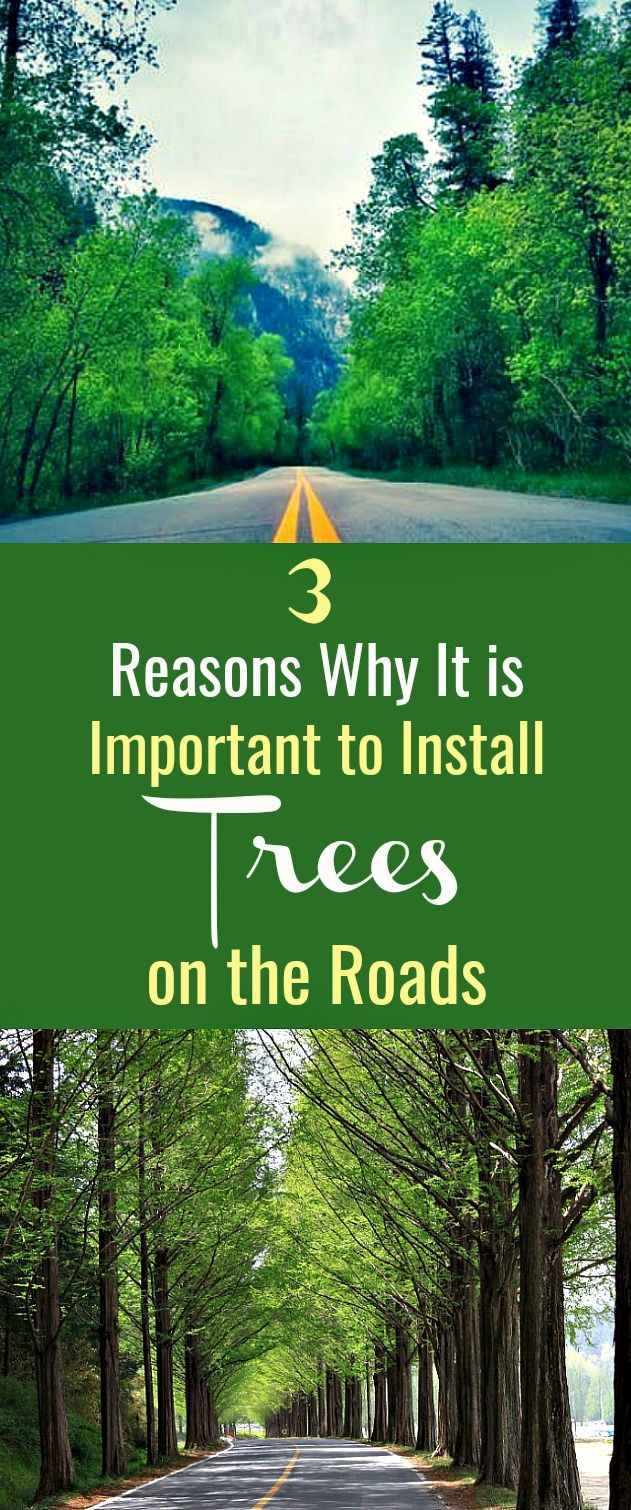 3 Reasons Why It is Important to Install Trees on the