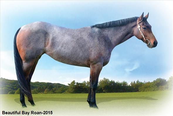 Equine.com's featured horse ~ Sheza Trophy Wife