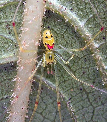 e01c05c52681bb3fc46782e0746c5f6e - How To Get Rid Of Crab Spiders In Hawaii