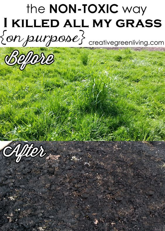 how to get rid of weeds without killing grass uk