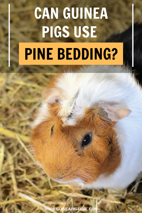Pin on Guinea Pig Accessories