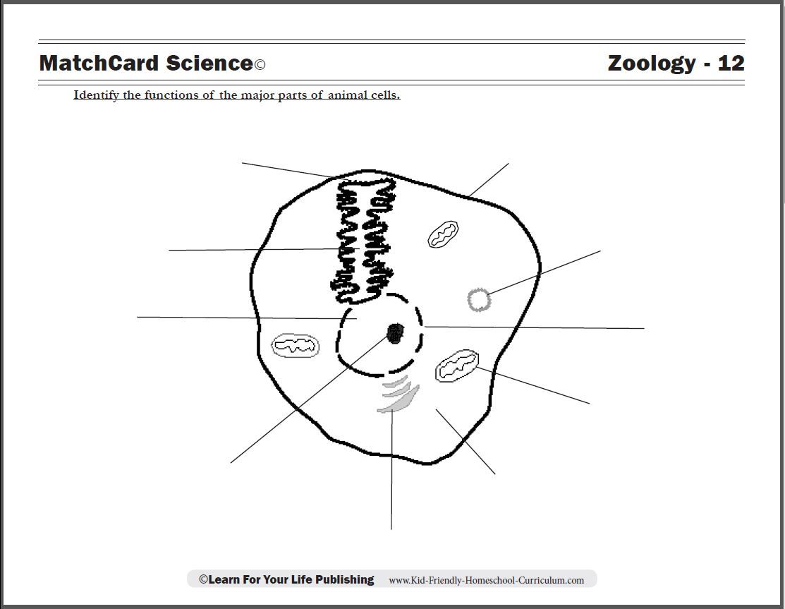small resolution of Zoology Curriculum   Cells worksheet