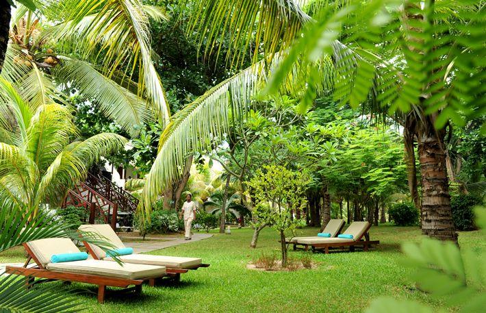 creer son jardin tropical - Recherche Google   Jardin tropical ...