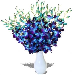 Image Detail For Dendrobium Galaxy Blue Orchids