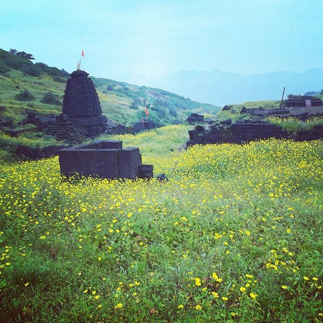 Grasslands at harishchandragad