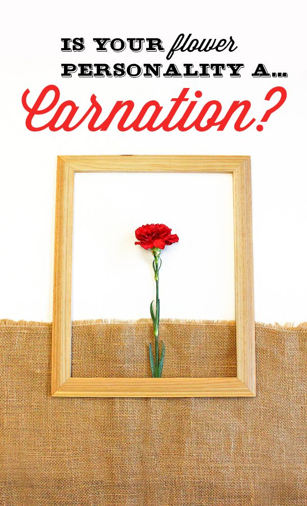 Are you a  Carnation flower? You tend to be genuine and down-to-earth. Your friends seek your guidance and advice as you're practical and realistic. You like the simple things in life and fear big changes, however you  unique sense of style. Share with us your flower personality for a chance to win $100 VISA gift card.