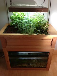 Countertop Aquaponics System : ... aquaponics setup using a fish tank. #aquaponics #fishtank #aquarium