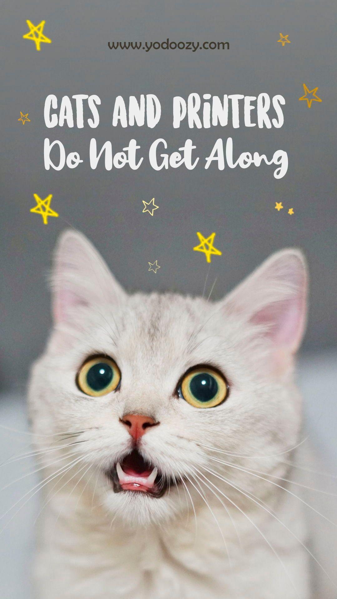 Need Help Identifying Kitten Gender Cat S Kitten Cats