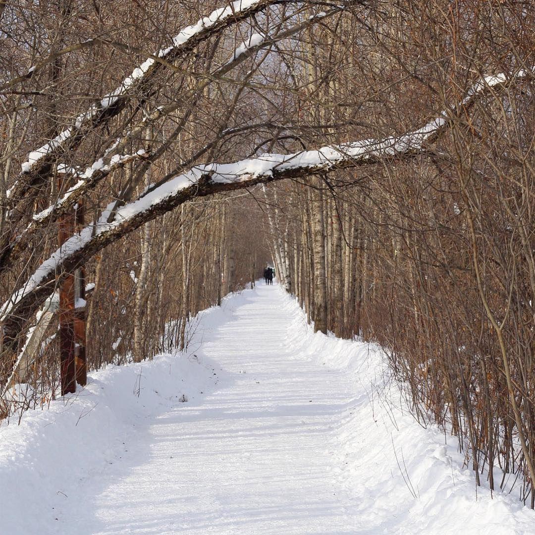 Thomas Photography On Instagram Chemin Enneige Winter Hiver Nature Photography Quebec Canada Landscape Paysage Magog Love Narcityquebec Lemoi