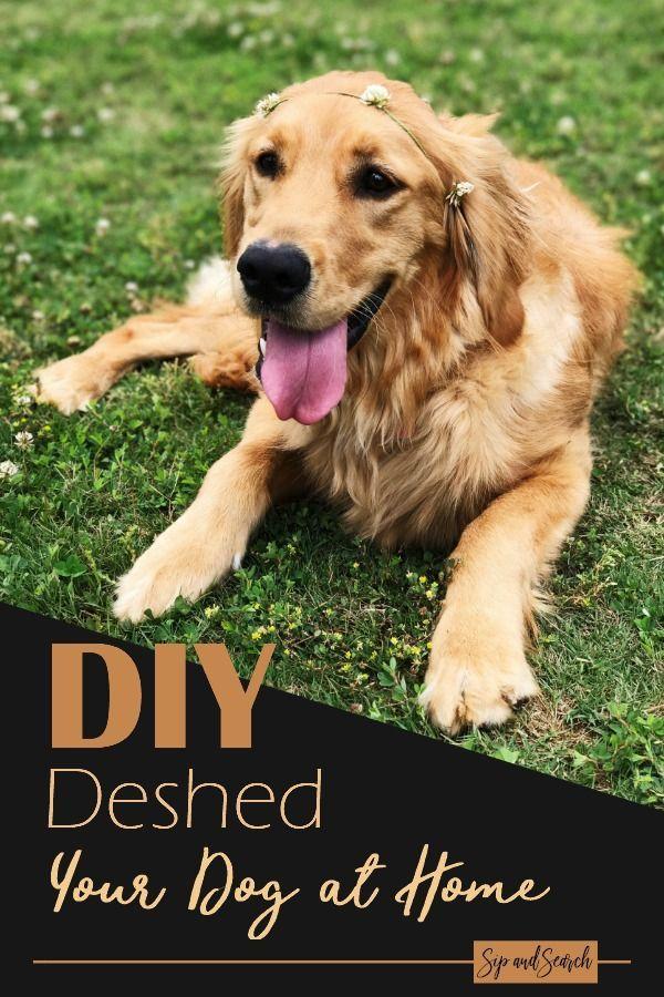 DIY How to Deshed Your Dog Dogs, Deshedding dog, Your dog
