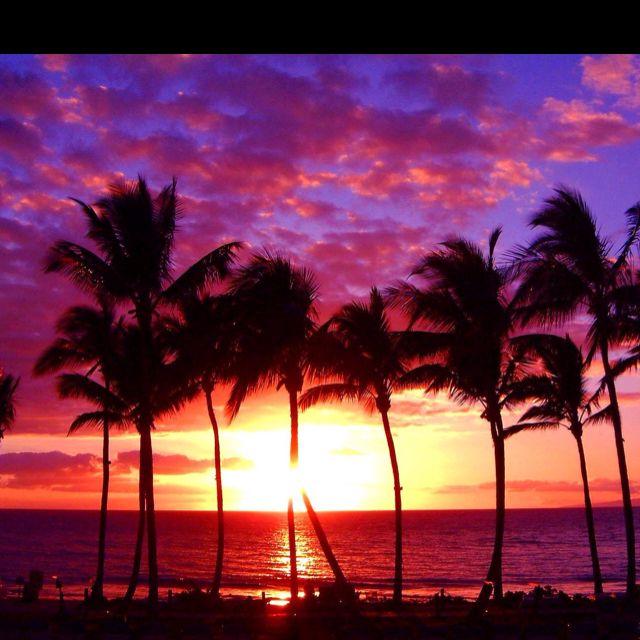 Statement Bag - Phoenix Palms-Teal Skies by VIDA VIDA TXqJkrH