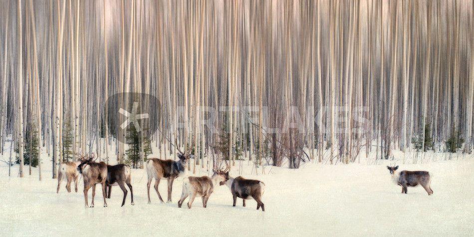 """""""In the woods"""" Poster von Priska Wettstein - ARTFLAKES.COM"""