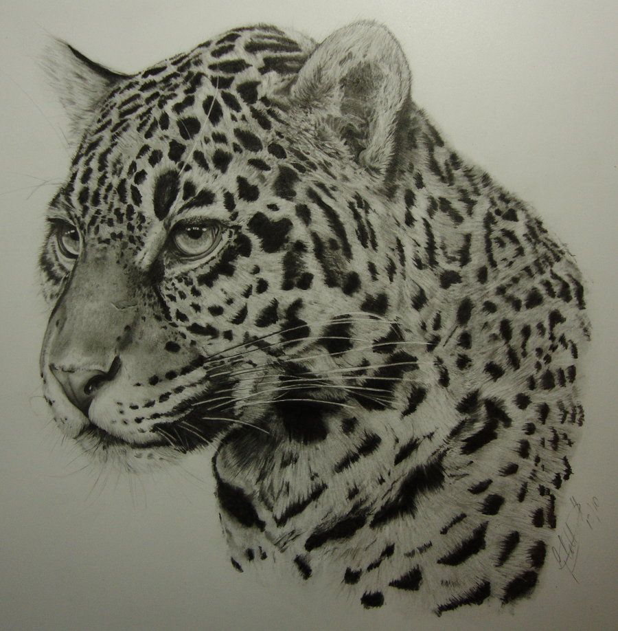 Jaguar by Dhekalia.deviantart.com on @deviantART A3 Pure ...