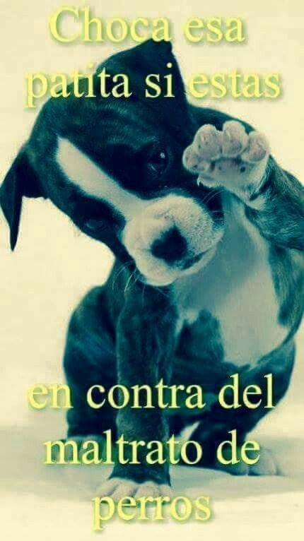 Son Angeles De 4 Patitas Que Dios Puso Para Amarlos Perros Tristes Perros Perros Lindos