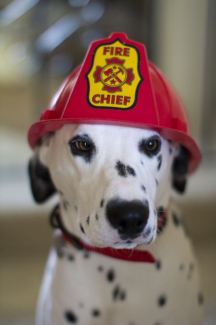 Fire Department Dogs Silly Picture