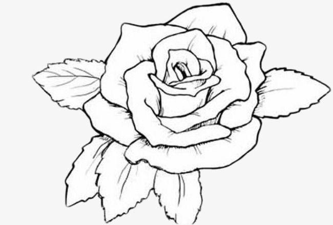 ومن ناحية رسم الورود Rose Coloring Pages Flower Coloring Pages Pyrography Patterns