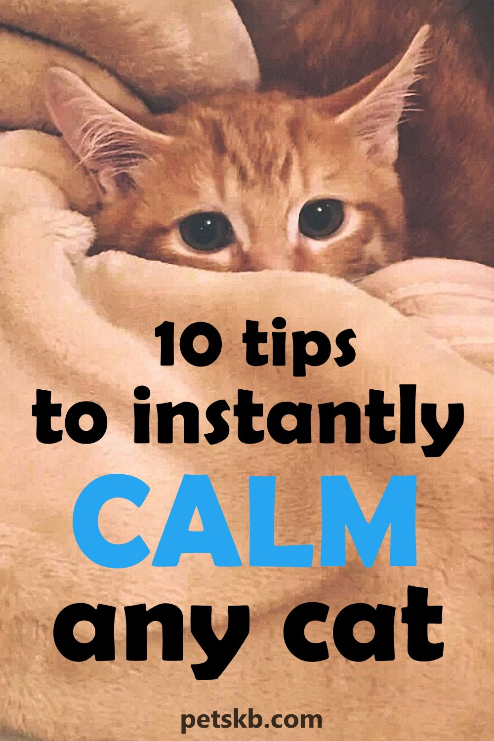 10 Tips To Instantly Calm Any Cat The Pets Kb In 2020 Cat Care Kittens Funny Calming Cat