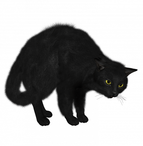 Black Cat Png Transparent Image Black Cat Pngget To Download Free Black Cat Png Vector Photo In Hd Quality Without Limit It Comes Image Cat Black Cat Cats