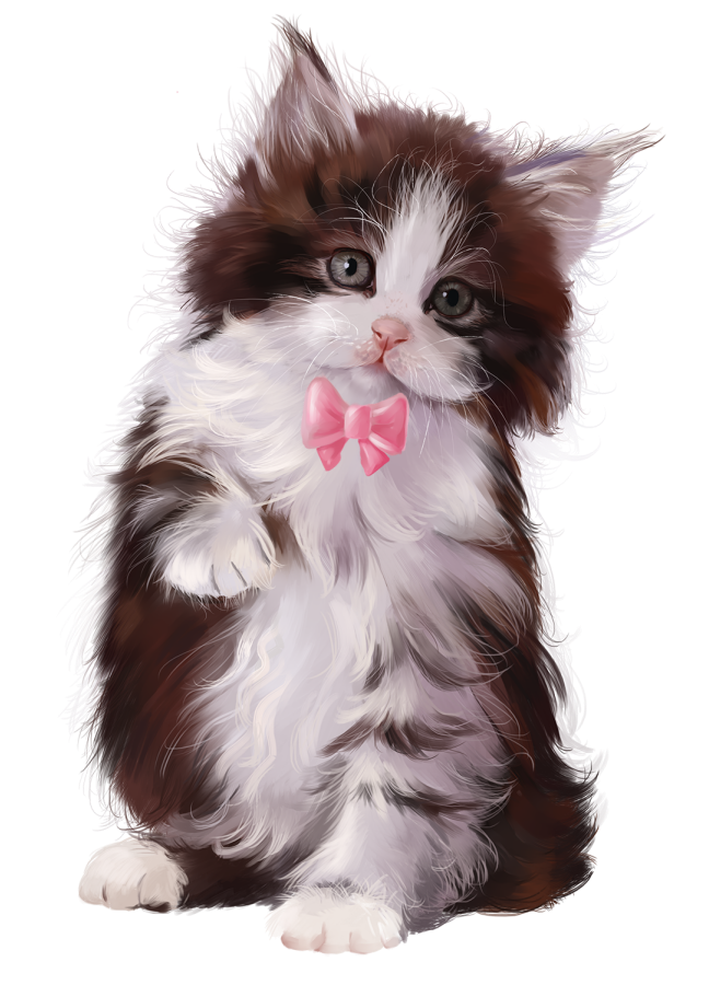Pin By You Know My Name On Framed 3 In 2020 Cute Cats And Kittens Funny Cute Cats Cute Animals
