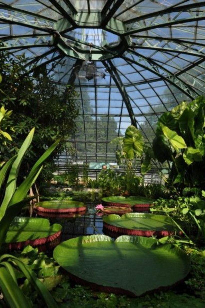 Botanischer Garten Der Universitat Basel Botanischer Garten Garten Pflanzen