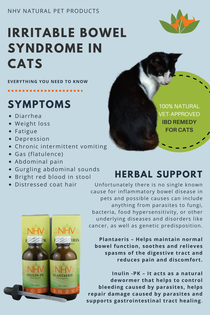 Irritable Bowel Syndrome In Cats Symptoms And Herbal Support For Your Cat With Ibd In 2020 Cat Illnesses Cat Symptoms Irritable Bowel Syndrome