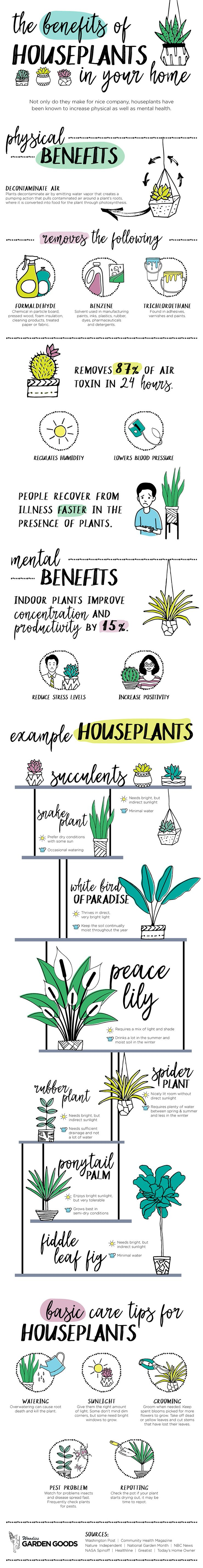 The benefits of houseplant infographic the plant hunter awesome