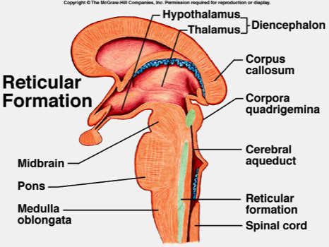 reticular formation diagram 1993 volvo 240 radio wiring brain stem google search usmle and comlex