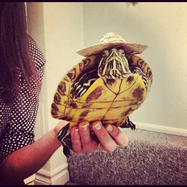 Turtle with a hat :D