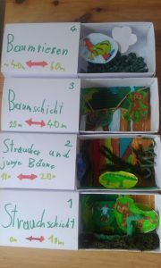 Regenwald in schachteln super f r projektarbeit und - Schulprojekte ideen ...