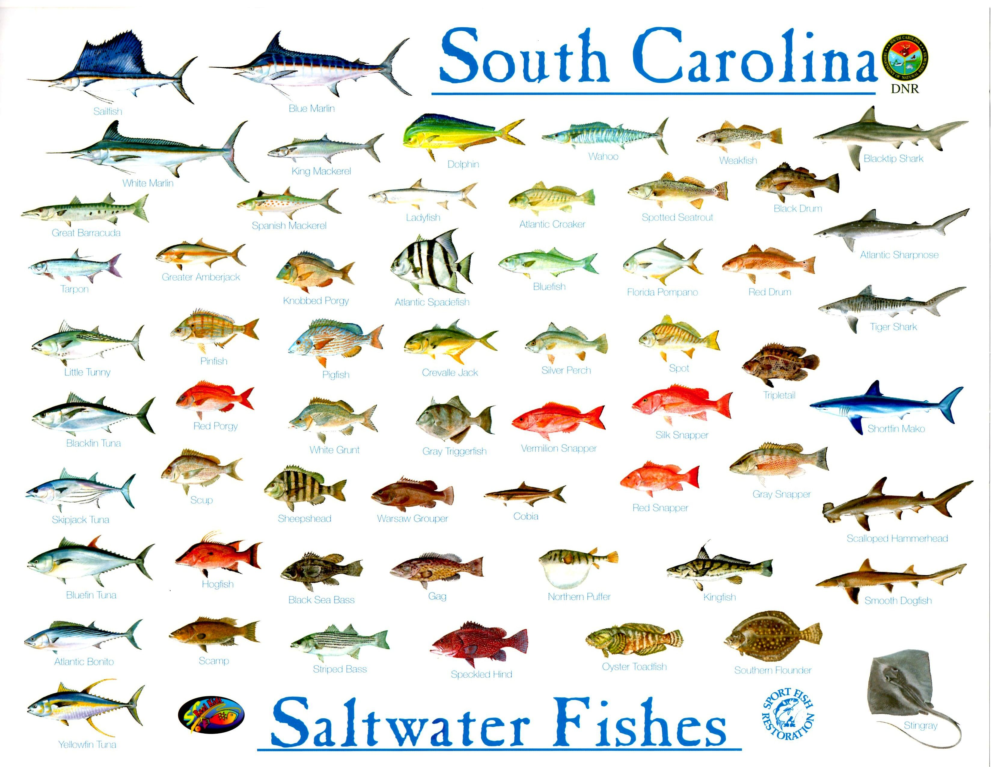 North Carolina Saltwater Fish ID Chart