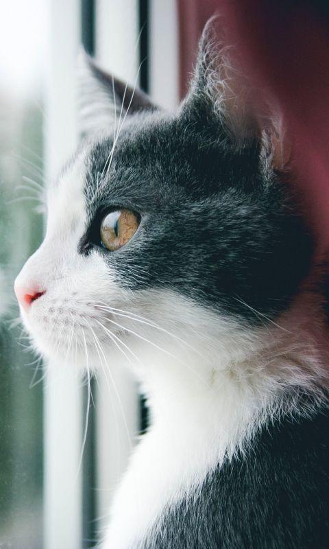 Cats Animals Pets Cat Kittens Feline Cats Cat Wallpaper Cat Window