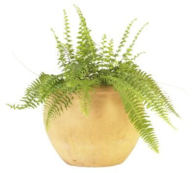 What To Do About Dusty Looking Mold On The Soil Of Houseplants Plant Watering System Plants Indoor Plants