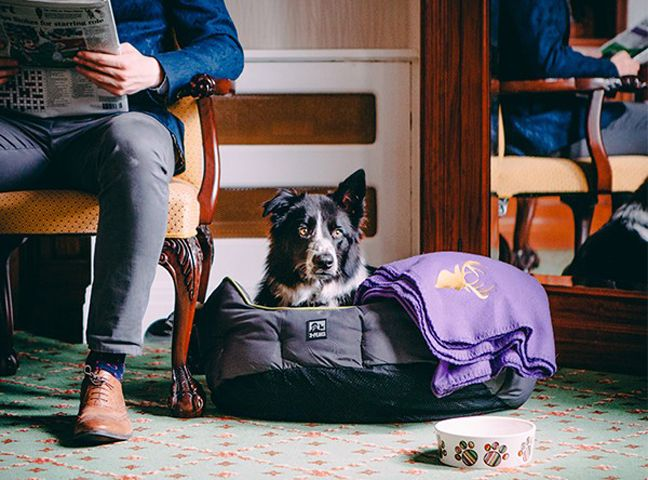 These Are The Best Dog Friendly Hotels For A Holiday Suitable For