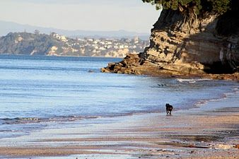 Takapuna Beach in New Zealand near Auckland