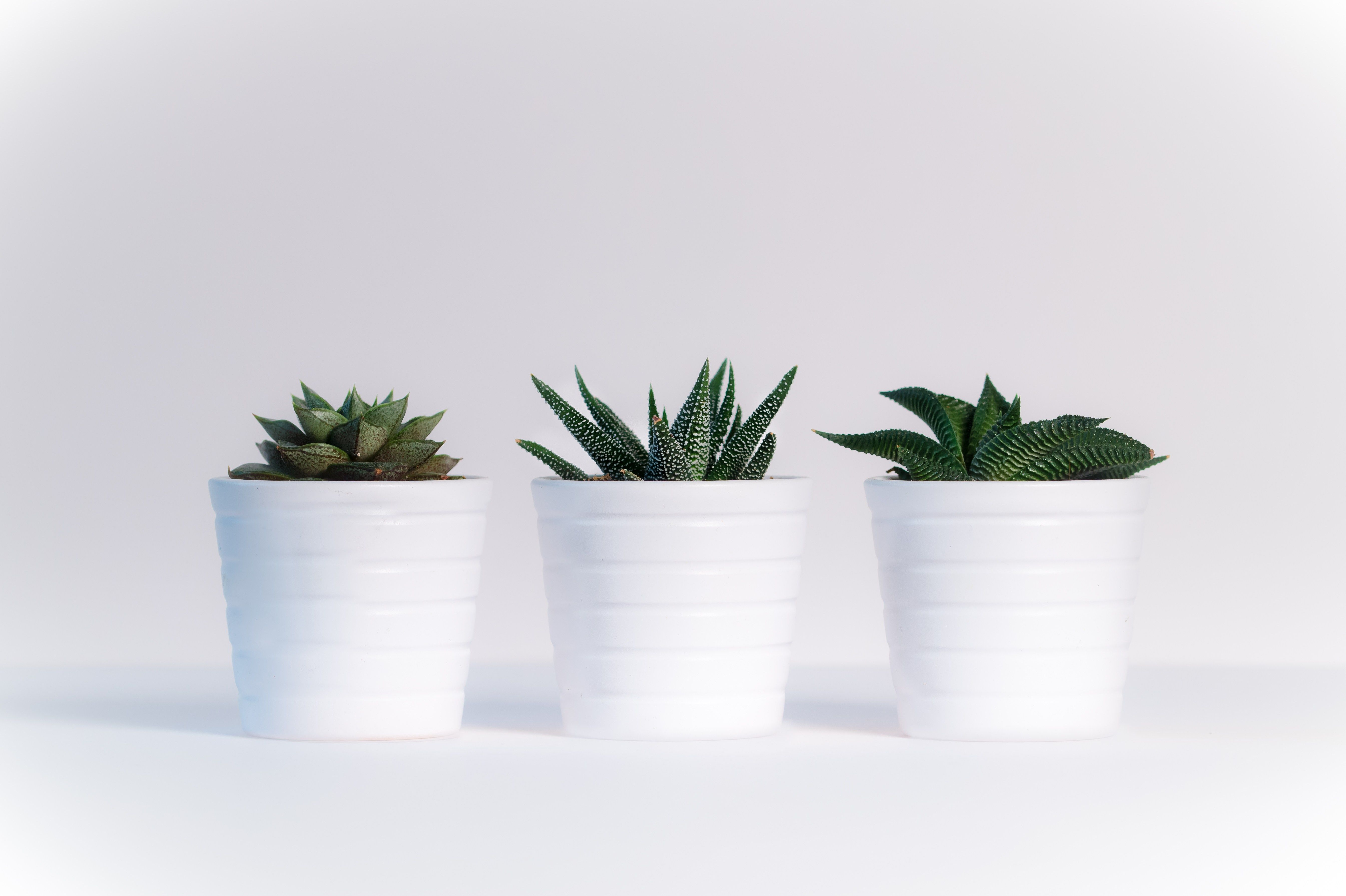 Houseplants Add Color, Life And Are Natural Air Purifiers For