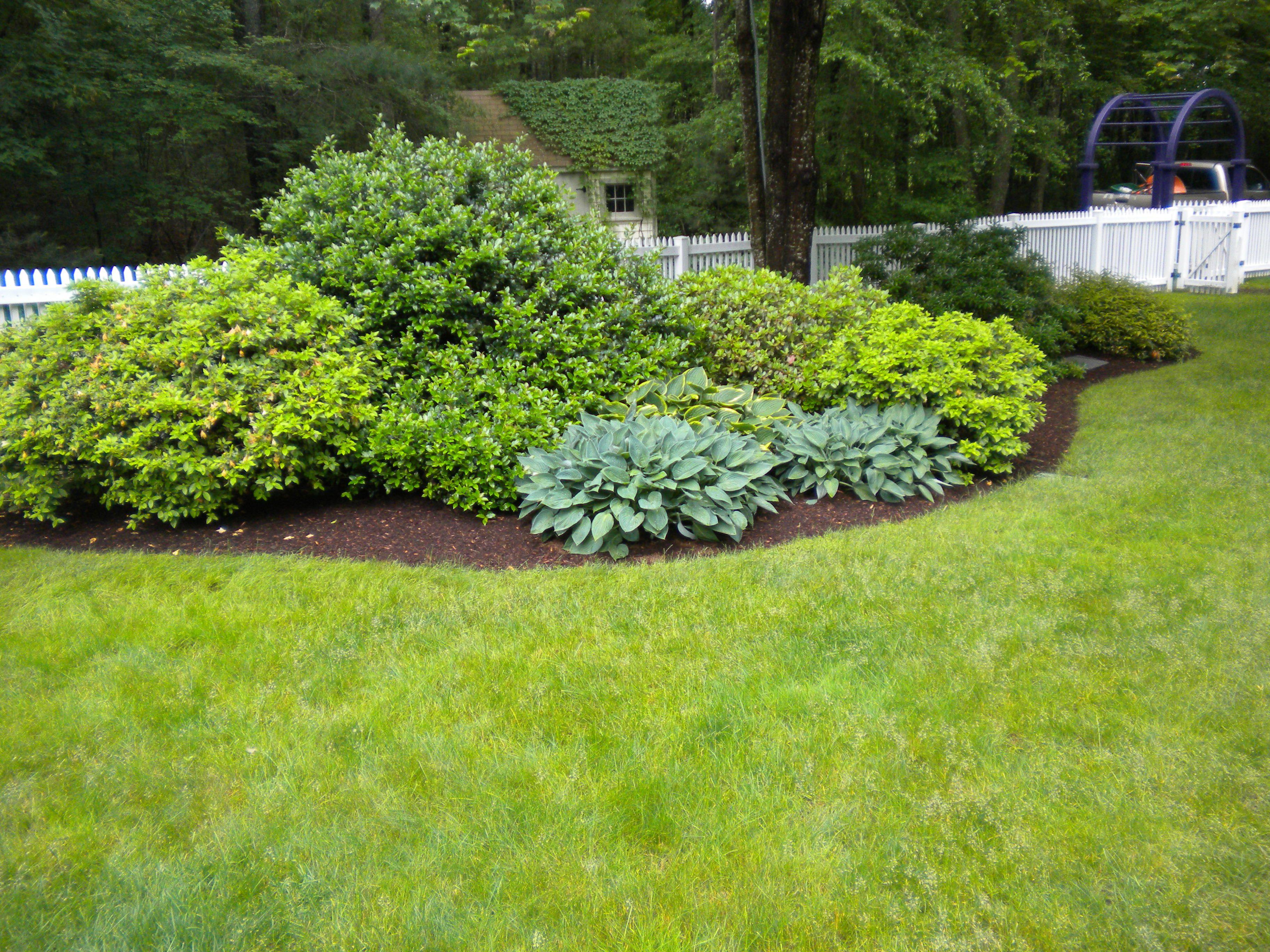 popular landscaping landscaping shrubs corpus christi texas and gardening landscaping. Black Bedroom Furniture Sets. Home Design Ideas