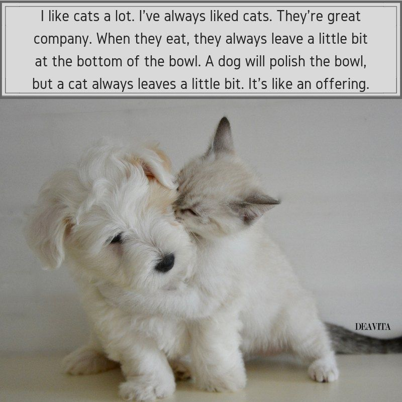 Cats Quotes Pet Love Sayings With Funny Photos Cats Dogs Funny Pets Quotes Cat Quotes Funny Dog Quotes Cat Vs Dog