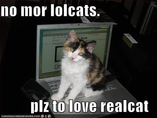 No more lolcats. #lolcat
