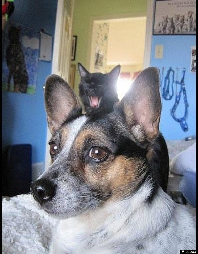 34 Funniest Dog Photobombs On The Planet Photo Fails Funny Dogs