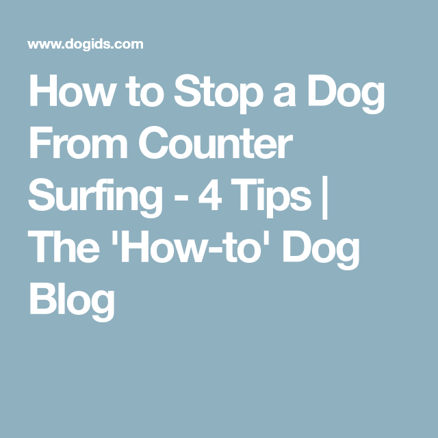 How To Stop A Dog From Counter Surfing - 4 Tips