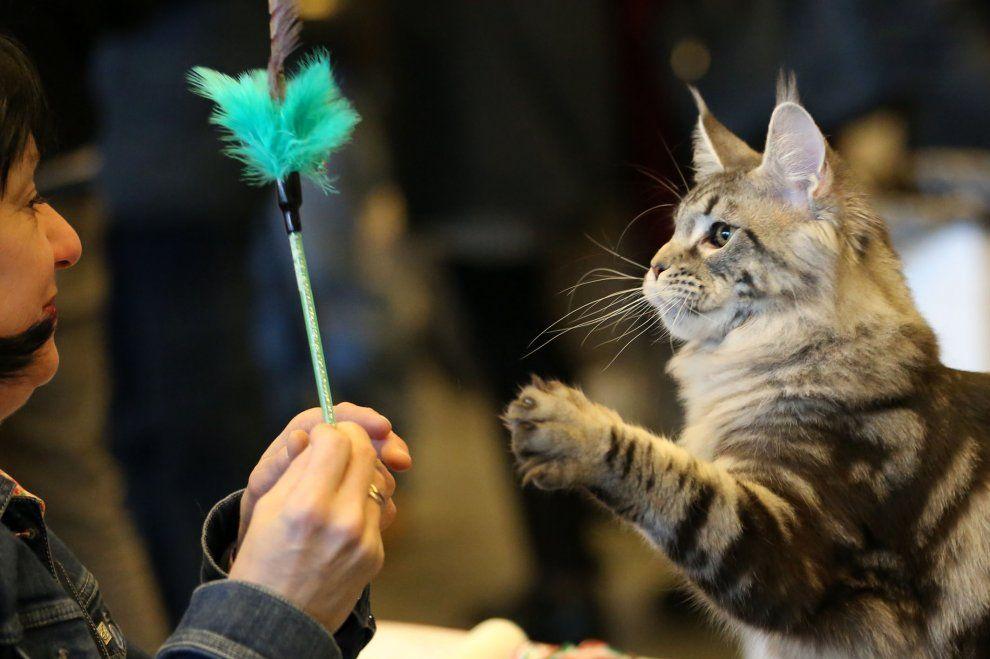 Genova, tutti pazzi per i gatti